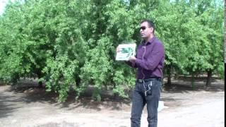 Spring & Summertime Almond Diseases, Gurreet Brar, UCCE Fresno Farm Advisor