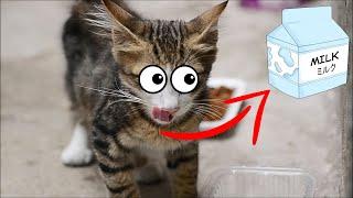I Feeding Stray Kittens And Stray Cats (Pretty Cats)