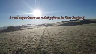 Une aventure en Nouvelle-Zélande/ 6 semaines dans une ferme de vaches laitières