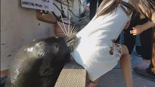 Dad Thanks Hero Who Saved Daughter After She Was Snatched by Sea Lion