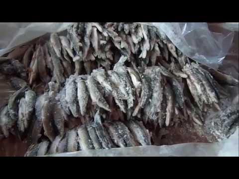 'Горят озера Сибири'.Ловушка для рыбы Тюнейка.