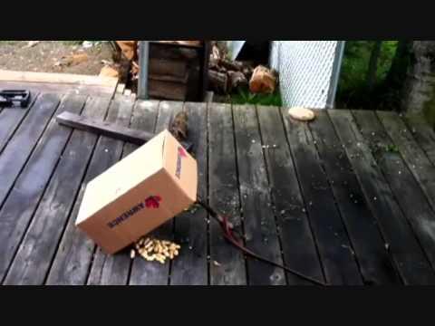 Squirrel Bait Demo