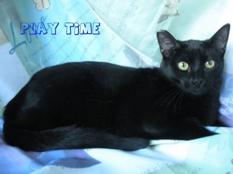 PLAY TIME -  Twilight The Black Cat