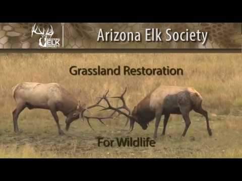 Arizona Elk Society Grasslands  Restoration for Wildlife Project