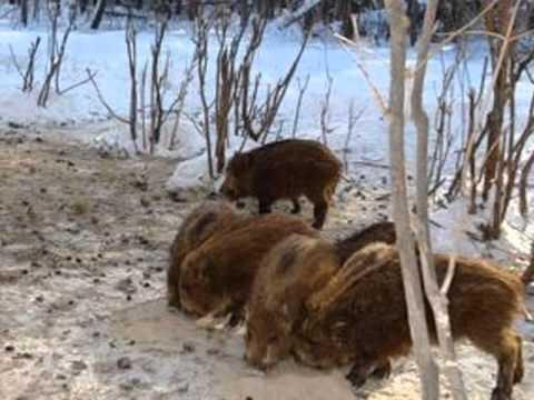 Дикие животные Челябинской области