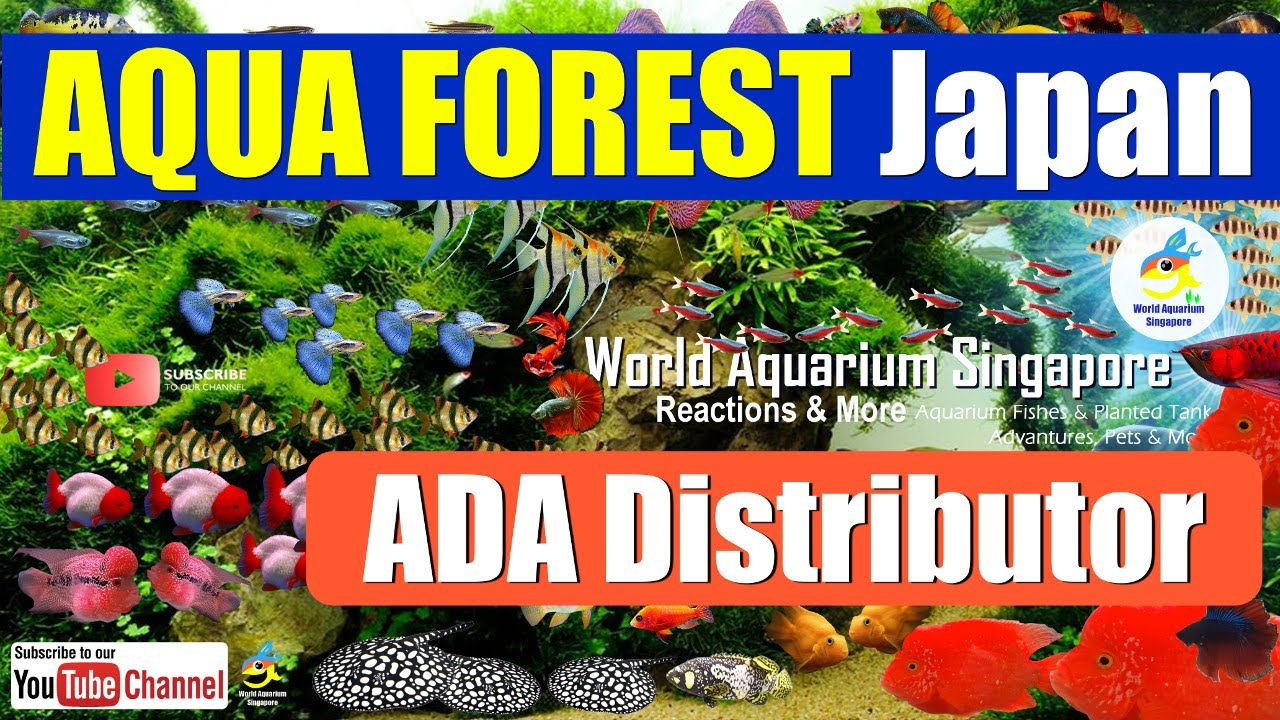 Aqua Forest Japan Aquarium Shop Tour ADA Aquascape ...