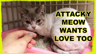 Adopting an Aggressive Cat Abandoned by Owner Twice