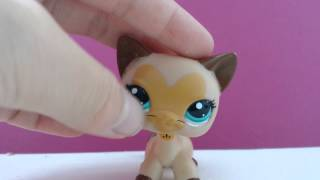 ♡all Of My Lps Dachshunds And Shorthair Cats