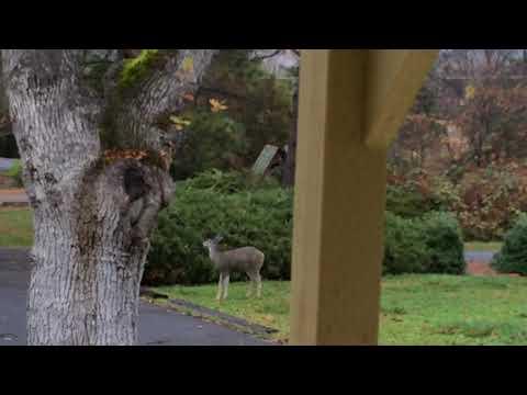 Meditation: Wildlife at Peace and Play