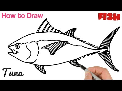 How To Draw Tuna Fish Easy For Beginners | Art Tutorial