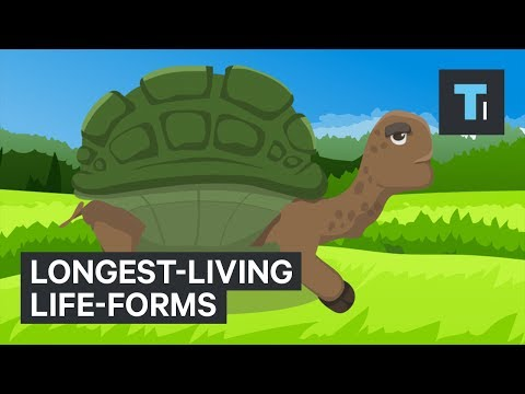 These Are The Longest-Living Life-Forms On Earth