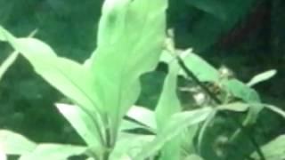 Минеральное голодание аквариумных растений
