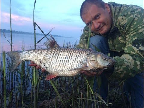 Рыбалка Дикарем на Реке Волге Ловля с Берега на Закидушки Донку Язь Голавль