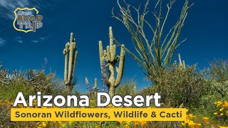 Arizona Cacti, Wildflowers & Wildlife in the Sonoran Desert