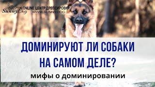 Доминирует ли собака над хозяином на самом деле? Мифы о доминировании собак