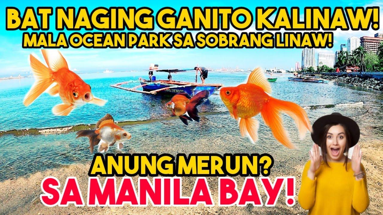 CRYSTAL CLEAR IS REAL!GRABE! SOBRANG LINAW NA NG TUBIG SA MANILA BAY! MANILA BAY UPDATE
