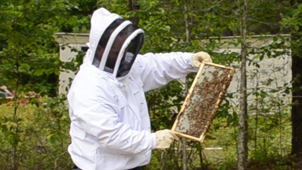 How to Inspect a Beehive