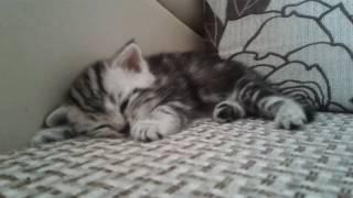 У нас новая кошка! Спит и дёргается... (бес или нет?)