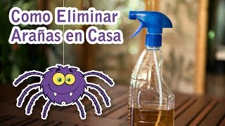 Como Eliminar las Arañas de Casa Efectivo, Natural, Barato y Facil