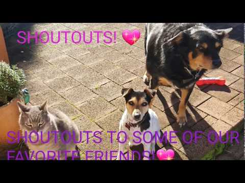 Cute dogs Bella and Beau and Felix the cat SHOUTOUT to more great friends!