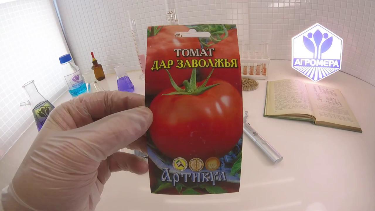 томат заволжский отзывы фото название