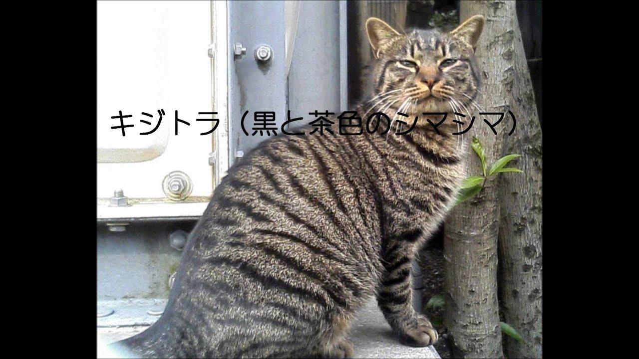 Youtube Cat In Japan