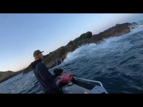 Winter Kingfish East Coast New Zealand