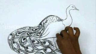 How to Draw a Peacock