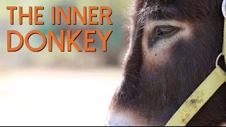 The Inner Donkey - A Donkey's Personality