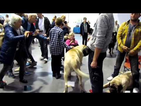Poznań International Poland Winners Dogs Show 08.11.2015