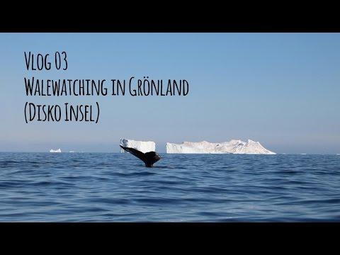 Vlog 03 Mein Abenteuer beim Whalewatching auf der Diskoinsel (Grönland)