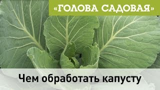 Голова садовая - Чем обработать капусту