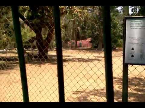 Nile Lechwe (Kobus megaceros) at Giza Zoo, Cairo, Egypt. 14.07.2012