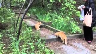 Гурзуф.Дикие.Коты живут у Черного моря в парке Крым.2015.