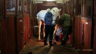 Операция по удалению меланомы у коня Василия