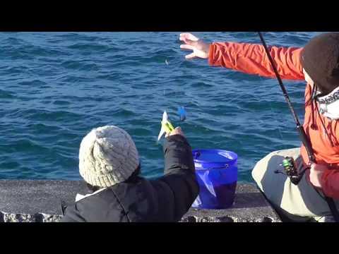 釣りガール、次々とアジをゲット!