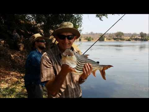 Tiger Fishing The Zambezi - FISHIN ADDICT GOES WILD