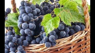 Рецепт вина из винограда просто и вкусно