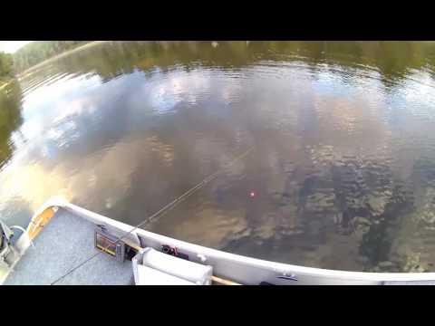 Little Bit Of Crappie Fishing Taylorville Lake