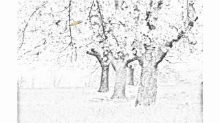 Auto Draw 2: Blossoming Cherry Trees, Bavaria, Germany