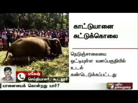 Live report: Elephant found shot dead inside Kerala