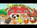 Belajar mengenal binatang dan suaranya // Nama dan Suara Hewan Ternak // Edukasi Anak Tk Balita Paud