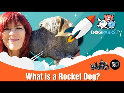 Rocket Dog Rescue, Oakland, California