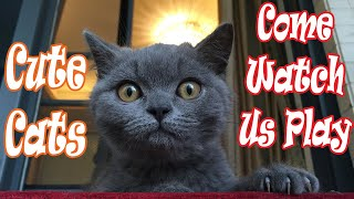 FREE LAUGHS! Cute Funny KITTENS CAT breeds Compilation Video LOL pets Super Hilarious!