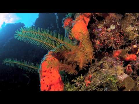 Haiti's Undersea Treasures