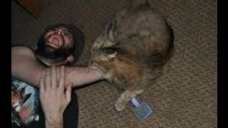 Кот из фильма ужасов