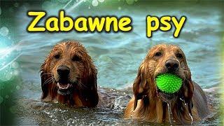 Śmieszne i zabawne psy. najlepsza kompilacja.