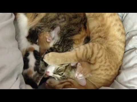 Mama Cat Just Gave Birth To Adorable Kittens  When Papa Cat Sees Them, This Happens