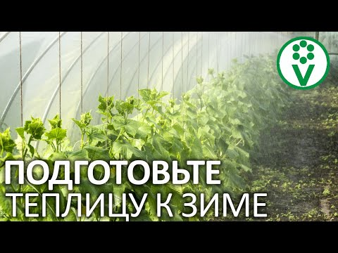 Вопрос: Что посадить в теплице после сбора помидоров?