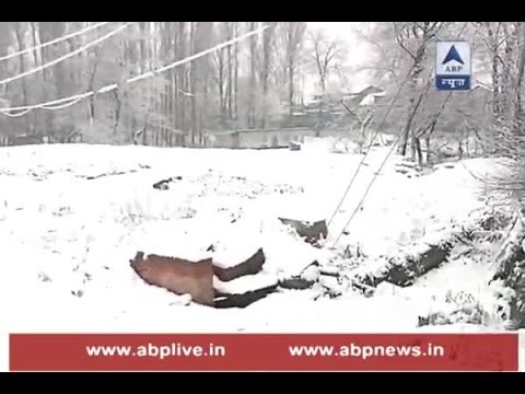 Heavy snowfall continues in Jammu & Kashmir; Watch ground report